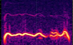 2018-05 Rondone 2018-05 n3 polyphonic call 0.4s - Spectrogram.jpg